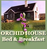 Ralf Sotscheck - Orchid House Bed & Breakfast